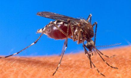 Construire un piège à moustiques à co2 sans insecticide