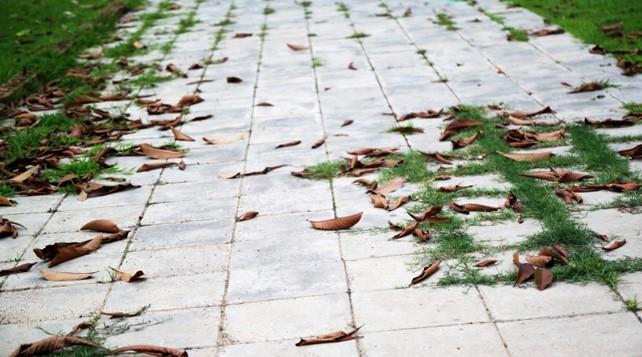 Astuce jardin: désherbant bio, bon marché et naturel