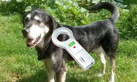 Puce électronique pour identifier chiens, chats et furets